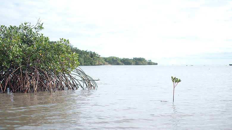 Mangroves at Waivunia Marine Park.