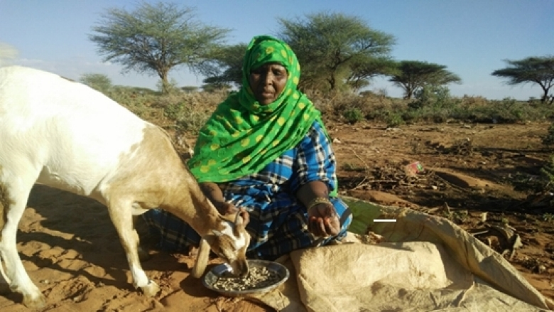 Osman Cise Mohamed, farmer and entrepreneur in Bari Region, Somalia, 2017.