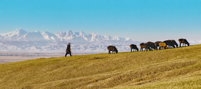 Global warming affects villagers' way of life. The arid climate means that people must graze their sheep higher and higher in the mountains, where the grass is better than in the lowlands. Photo Credits: Marat Sayranbaev (Kyrgyz Republic).