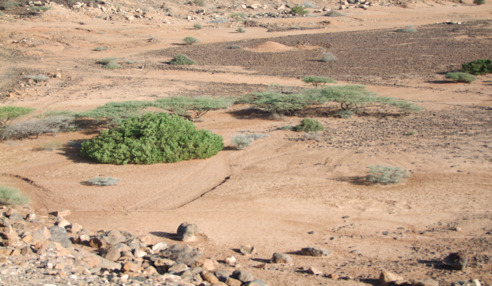 Drought Post Disaster Needs Assessment in Djibouti