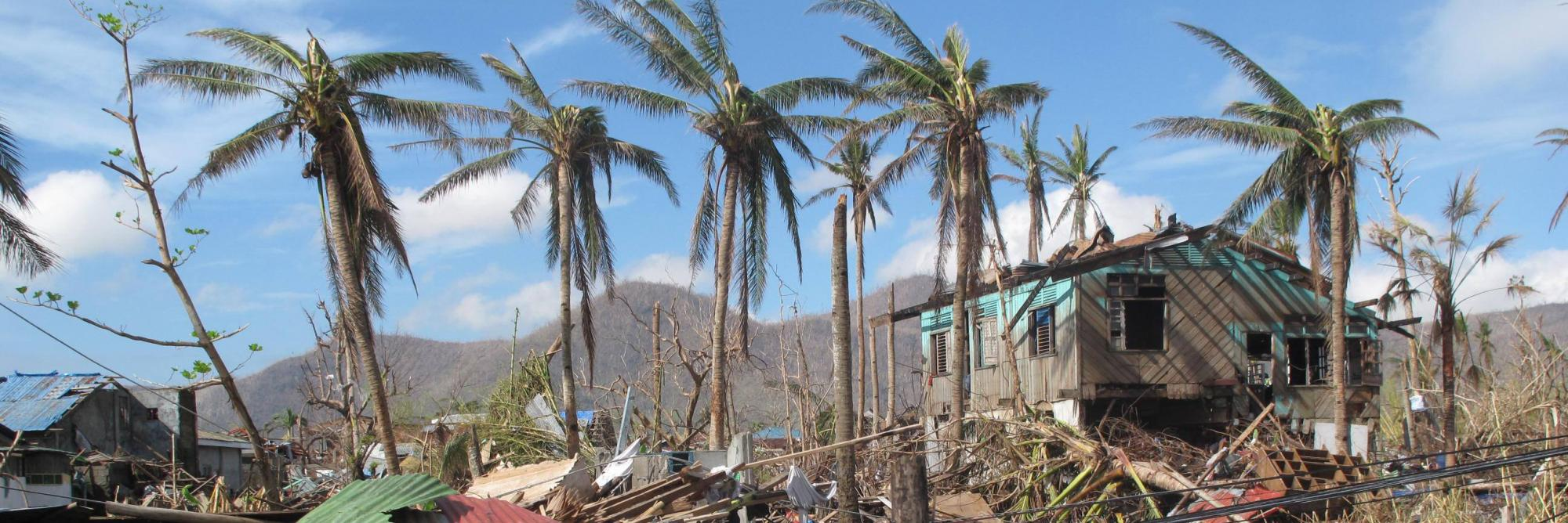 A few palm trees stand near destroyed homes amid the destruction caused by Typhoon Haiyan in 2013 in the city of Tacloban, Philippines