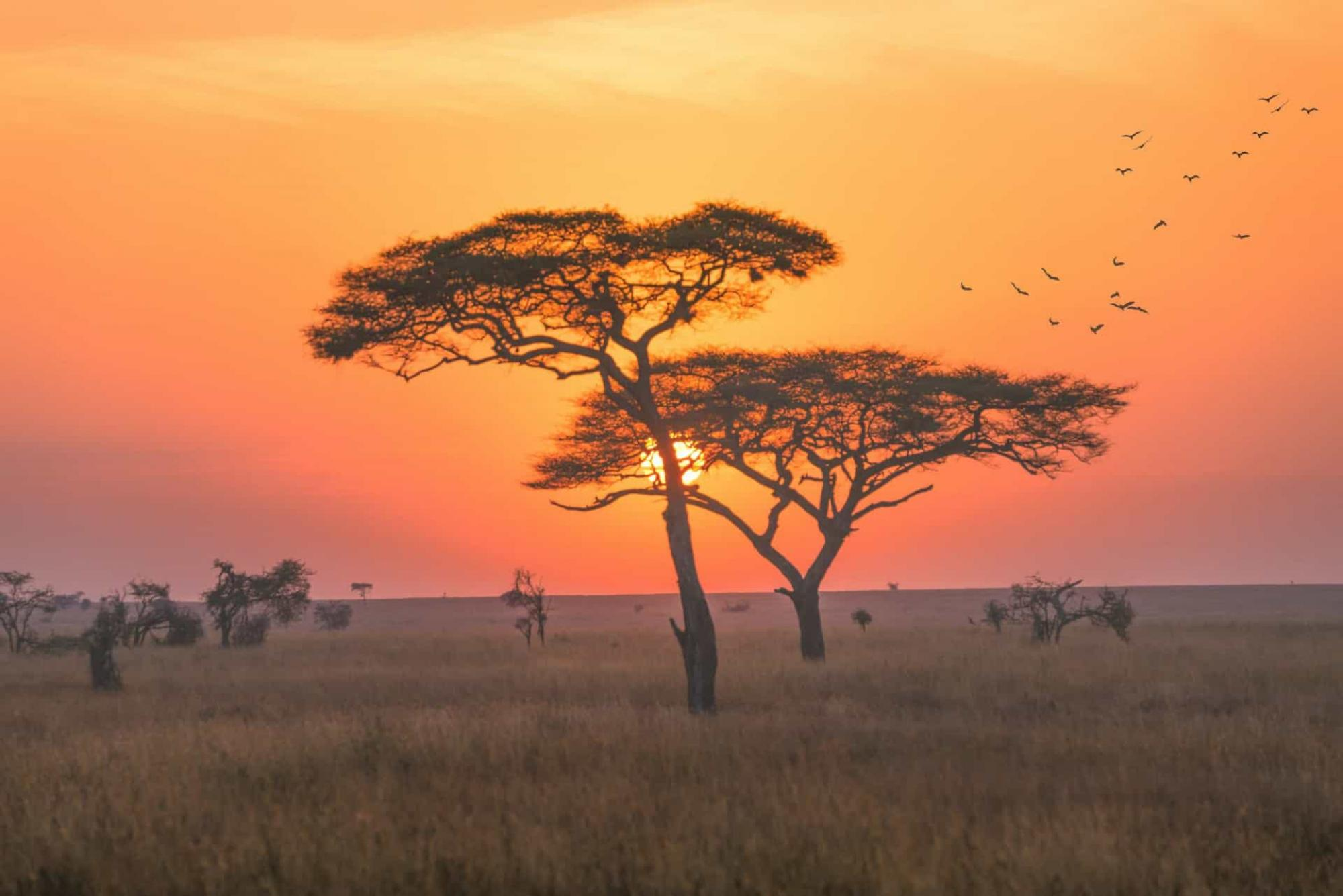 Two trees stand in front of a colorful sunset on a plain in Kenya
